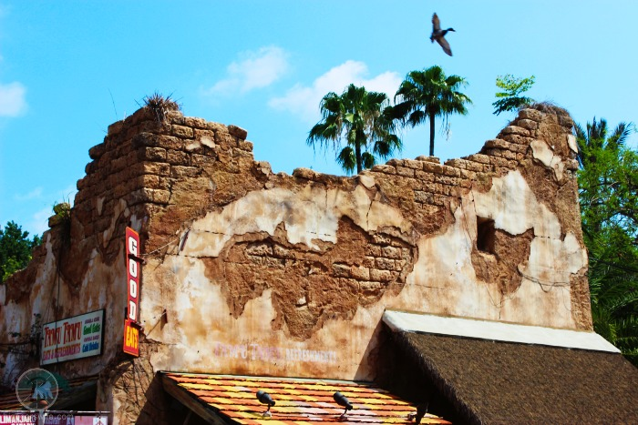 Disney's Animal Kingdom | BigBearsWife.com