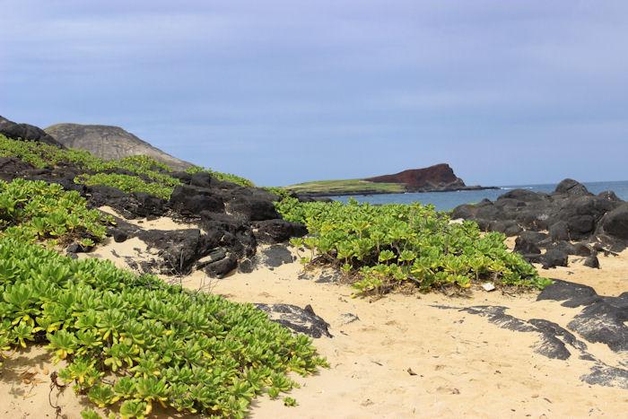 Day 1 - Honolulu,Hawaii - Seaside Bar and Grill, Makapu'u Beach and Keo's Thai Cuisine | BigBearsWife.com