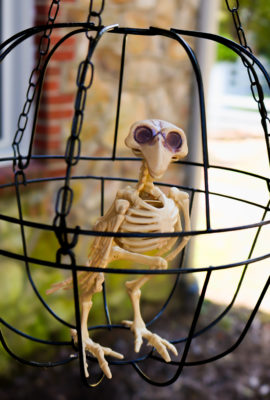 DIY Dollar Store Halloween Skeleton Bird Cage