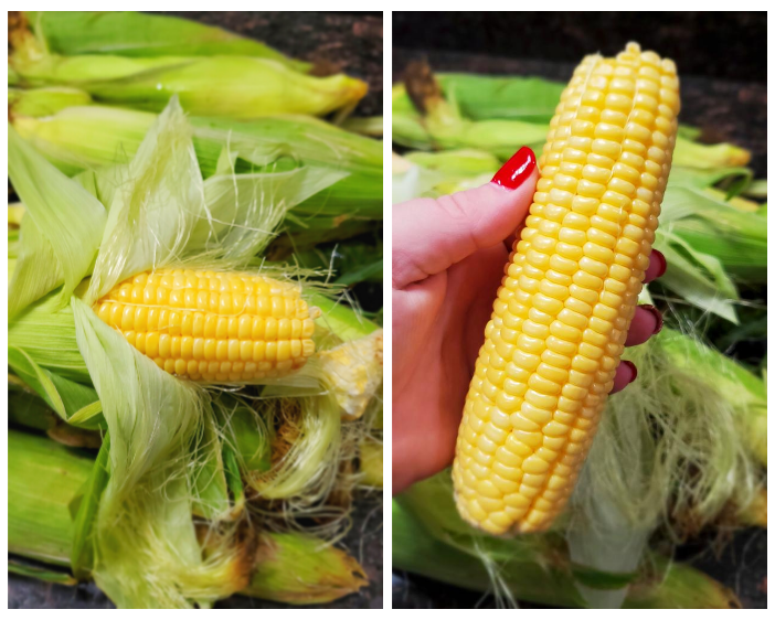 Corn on the cob with husk